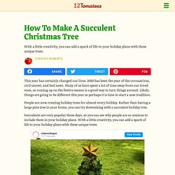 How To Make A Succulent Christmas Tree
