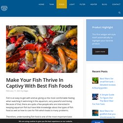 Make Your Fish Thrive In Captivy With Best Fish Foods - New 2021