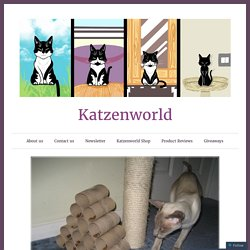 Making Your Own Interactive Cat Feeder – Katzenworld
