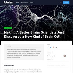 Scientists just discovered new kinds of cells in the human brain