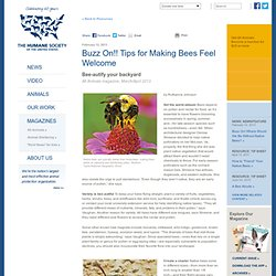Buzz On! Tips for Making Bees Feel Welcome