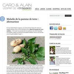 Maladie de la pomme de terre : alternariose