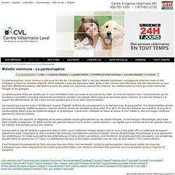 Maladie-la panleucopénie-CVL