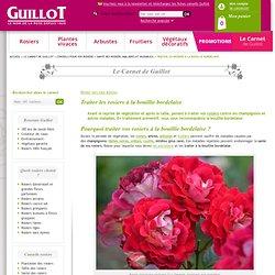 Traiter les rosiers contre les maladies à la bouillie bordelaise