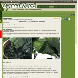 Les maladies - Maladies-Moisissures - Guides - Guides de culture du cannabis