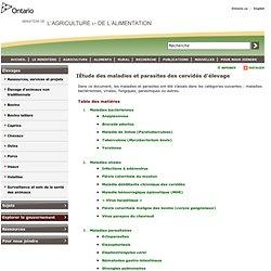 OMAFRA 01/03/98 Étude des maladies et parasites des cervidés d'élevage