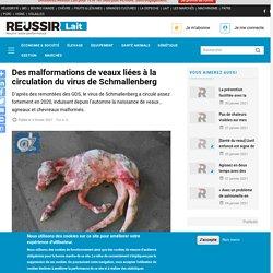 REUSSIR 03/02/21 Des malformations de veaux liées à la circulation du virus de Schmallenberg