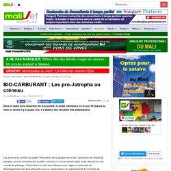 Malijet BIO-CARBURANT : Les pro-Jatropha au créneau Bamako Mali