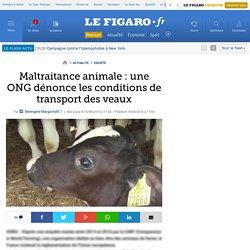 Maltraitance animale : une ONG dénonce les conditions de ...