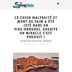 Ce chien maltraité et mort de faim a été jeté dans un vide-ordures. Ensuite un miracle s'est produit !