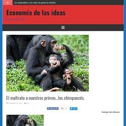 El maltrato a nuestros primos…los chimpancés. - Economía de las ideas