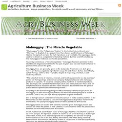Malunggay : The Miracle Vegetable « Agriculture Business Week