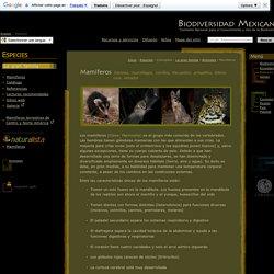 Biodiversidad Mexicana