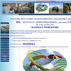 MAMMALS OF THE WORLD; ALL MAMMALIAN SPECIES