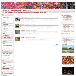Mammifère - Le québec, nature et découverte