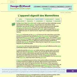 Les Mammifères : appareil digestif.