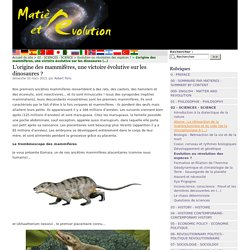 L'origine des mammifères, une victoire évolutive sur les dinosaures ?