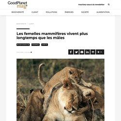 Les femelles mammifères vivent plus longtemps que les mâles
