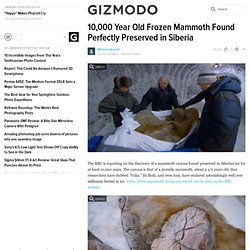 10,000 Year Old Frozen Mammoth Found Perfectly Preserved in Siberia