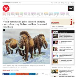 Woolly mammoths' genes decoded, bringing clues to how they died out and how they could come back - Science - News - The Independent