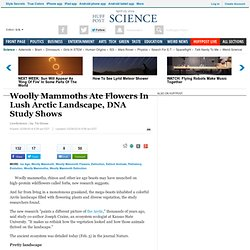 Woolly Mammoths Ate Flowers In Lush Arctic Landscape, DNA Study Shows