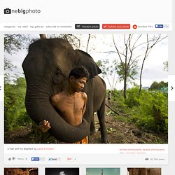 An Asiatic elephant embraces his human
