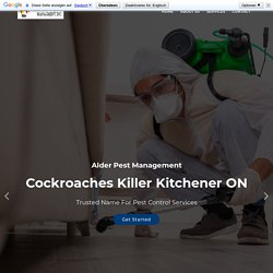 Pest Control Services Kitchener CA