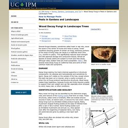 Wood Decay Fungi in Landscape Trees Management Guidelines