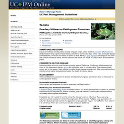 UNIVERSITY OF CALIFORNIA - UC IPM - Powdery Mildew on Field-grown Tomatoes.