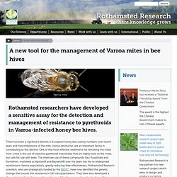 ROTHAMSTED RESEARCH - DEC 2013 - Rothamsted researchers have developed a sensitive assay for the detection and management of resistance to pyrethroids in Varroa-infected honey bee hives.