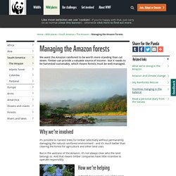 Managing the Amazon forests