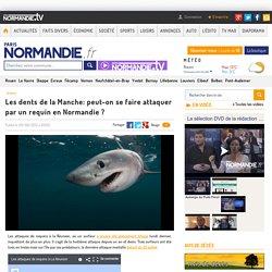 Les dents de la Manche: peut-on se faire attaquer par un requin en Normandie ?