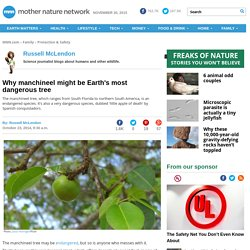 Why manchineel might be Earth's most dangerous tree