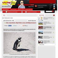 Des manchots déprimés sous antidépresseurs - Infos - Vivre FM, la radio du handicap