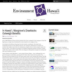 In Hawai`i, Mangrove's Drawbacks Outweigh Benefits