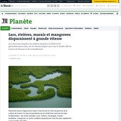 Lacs, rivières, marais et mangroves disparaissent à grande vitesse