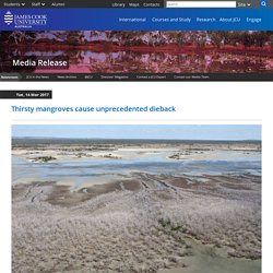 *****Thirsty mangroves cause unprecedented dieback - JCU Australia