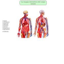 La mappa interattiva del corpo umano