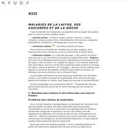Lire en ligne Les maladies des plantes maraîchères, 3e éd. - XIII - MALADIES DE LA LAITUE, DES CHICORÉES ET DE LA MÂCHE (Prévisualisation)