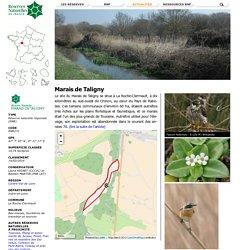 Marais de Taligny