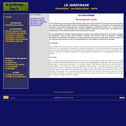 Marcottage par couche - Le marcottage - Jardinage
