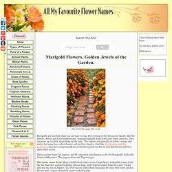 Marigold Flowers Are True Annuals. Golden Balls Of Sunshine.
