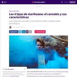 Los 4 tipos de marihuana: el cannabis y sus características