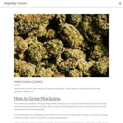Marijuana Clones: - HighSky Clones