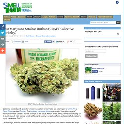 Smell the Truth » Best Marijuana Strains: Durban (CRAFT Collective Berkeley)