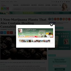 5 Non-Marijuana Plants That Also Contain Healing Cannabinoids