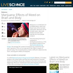 Marijuana: Effects of Weed on Brain and Body