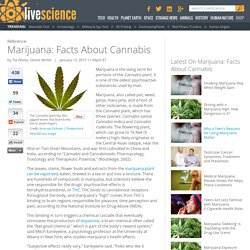 Marijuana: Facts about Cannabis