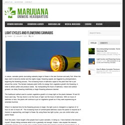 Marijuana Growers HQ – Light Cycles and Flowering Cannabis