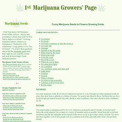 Funny simple how to grow marijuana seeds to flowers instruction